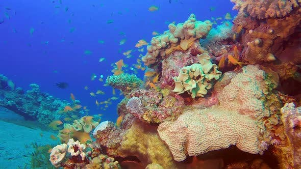 Thumbnail for Colorful Reef Scene