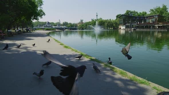 Thumbnail for Lake in Budapest City Park