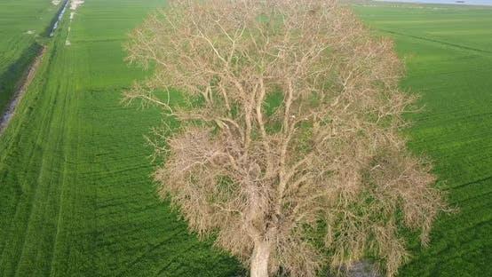 Ein Baum im Frühling auf einer grünen Wiese