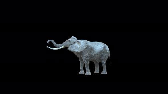 4K Elephant Eat