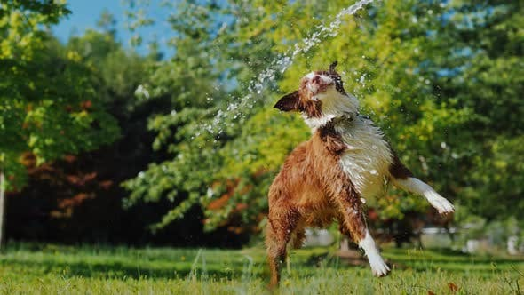 Active Dog Playing with a Garden Hose in the Garden