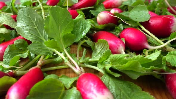 Thumbnail for Radish Fruits