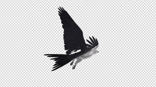 Swallowtail Kite - 4K Flying Loop - Back Angle