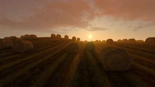 Rural Landscape Field Meadow With Hay Bales
