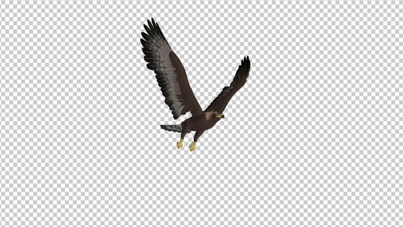 Thumbnail for Golden Eagle - 4K Flying Loop - Side Angle