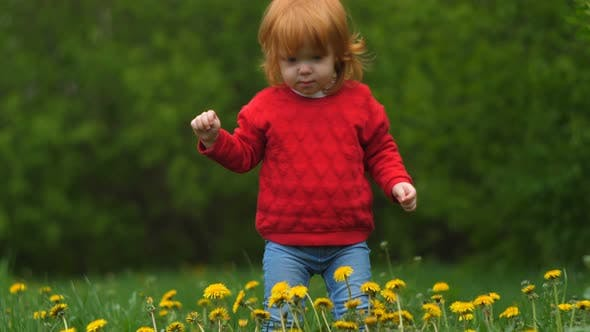 Thumbnail for Close-up of Little Happy Funny 2 Year Old Girl Holds in Hands Dandelion, Smiles and Laughs in Summer