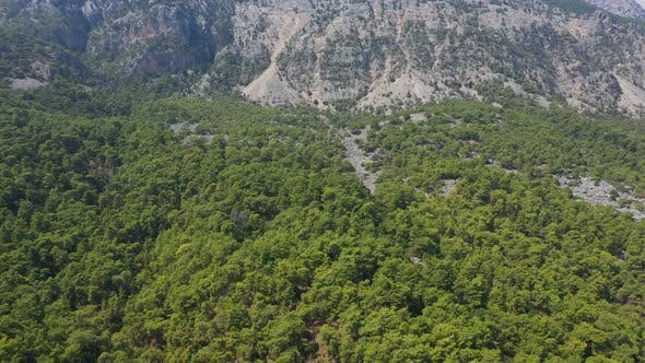 Thumbnail for Aerial View Trees Growing On The Mountain