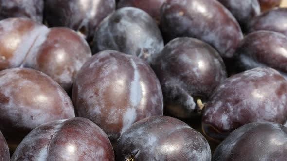 Thumbnail for Common plum Prunus domestica close-up 4K tilting footage