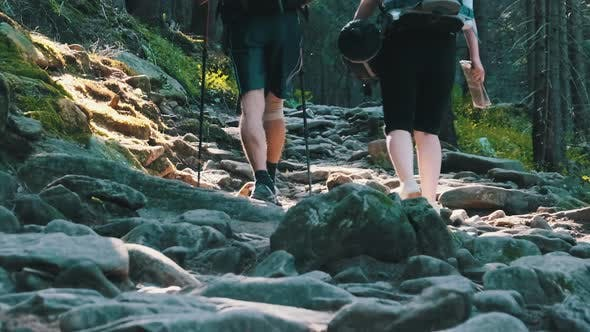 Thumbnail for Couple of Tourists with Backpacks Climbing Up on Stone Trail in Mountain Forest