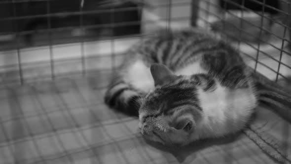 Thumbnail for Poor Homeless Cat Sleeping Behind Iron Bars, Pet Shelter, Abandoned Animals