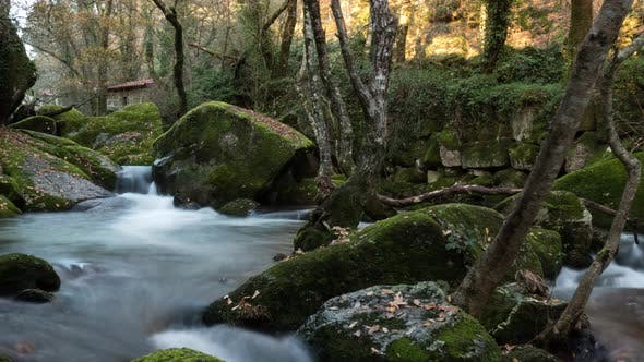 Thumbnail for Nature Landscape