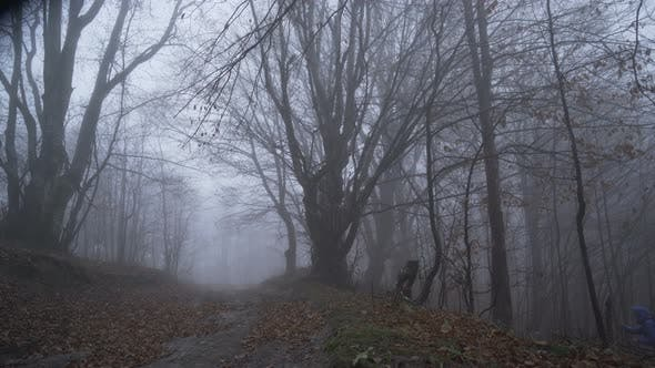 Lonely Toursit Lost in Deep Foggy Forest Reaching Forest Path