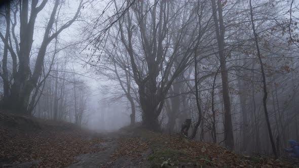 Thumbnail for Einsame Toursit verloren in tief nebligen Wald Erreichen Waldweg