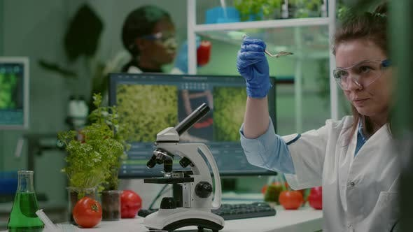 Scientist Researcher Examining Genetically Modified Green Leaf