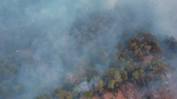 Smoke of a Forest Fire