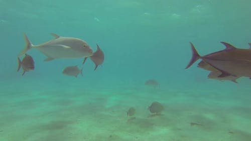 A school of fish feeding in a frenzy over a coral reef of a tropical island.