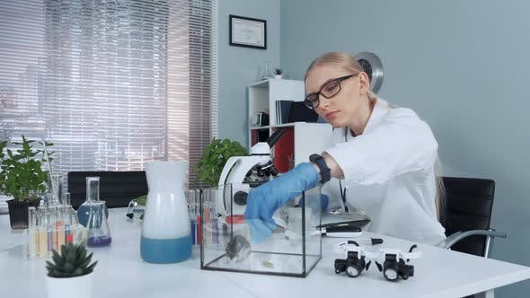 Chemistry Lab: Female Scientist Giving Hamster Organic Material To Eat