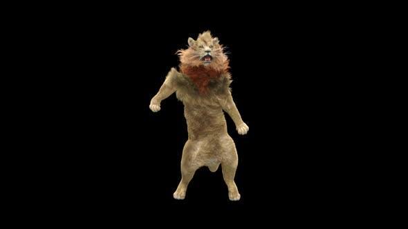 Thumbnail for Lion Dancing HD
