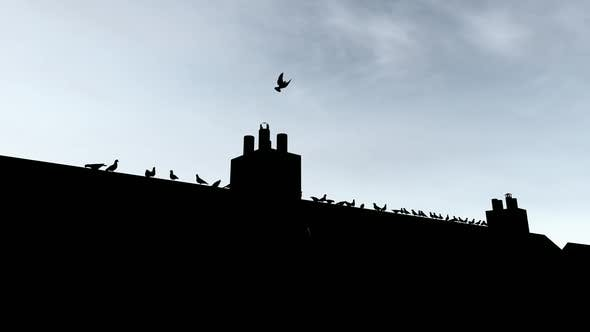 Thumbnail for Silhouette of Birds on the Roof