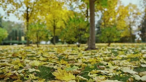 Beautiful Autumn in Outdoors