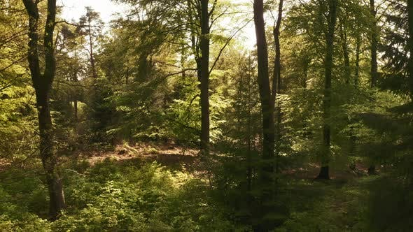Thumbnail for Relaxing Panning Shot Within the Forest