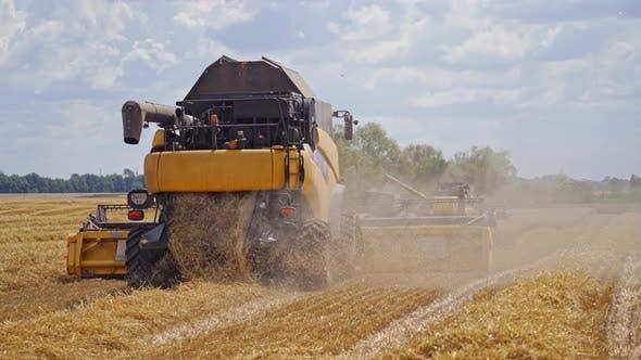 Season of gathering crops