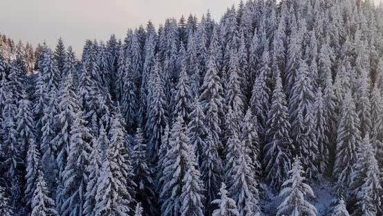 Mountain Trees Snow Aerial Drone Top Down in Fundata, Romania