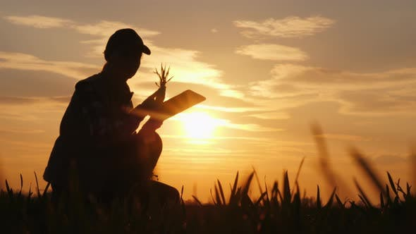 Thumbnail for Young Woman Farmer Studying the Seedlings of a Plant in a Field, Using a Tablet