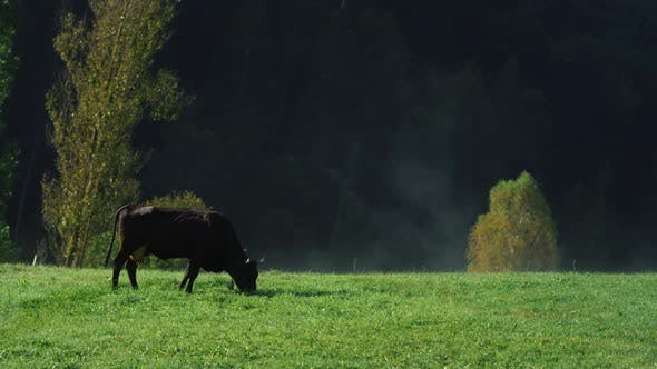Livestock Grazing at Countryside