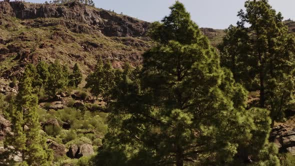 Thumbnail for Revealing Shot of the Trees and The Breathtaking View of the Gran Canaria Valley