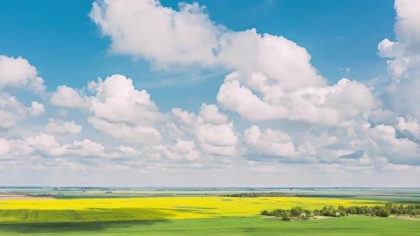 Vue aérienne Paysage agricole Floraison Floraison Colza Champ oléagineux Prairie Printemps